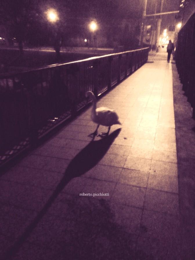Il ponte, il cigno e la gente