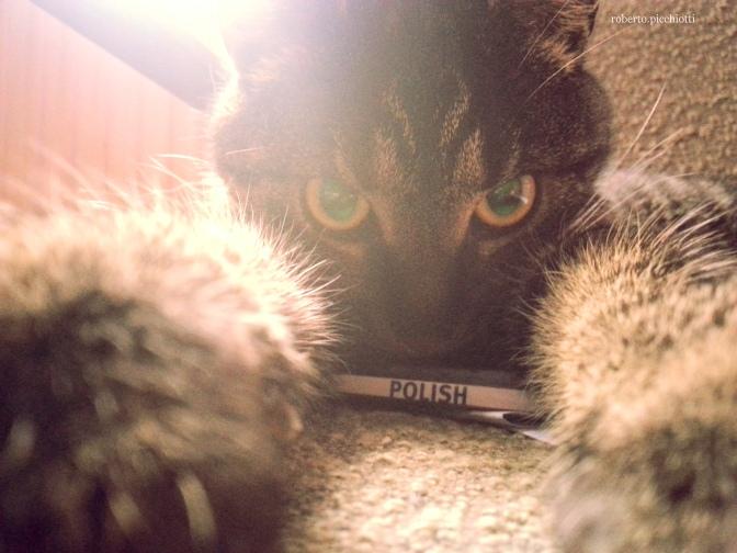 Pumeks, il mio gatto polacco