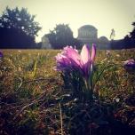 Spring in Hala Stulecia