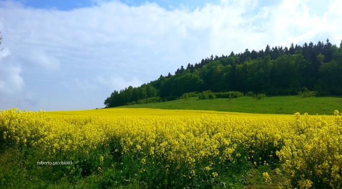 Viaggio nella natura polacca