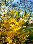 Park Tolpy Breslavia