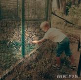 Zoo di Breslavia